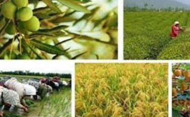 امضاء تفاهم نامه برای اشتغال ۵۰ هزار نفر در بخش کشاورزی گیلان