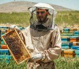 گیلان پنجمین قطب تولید عسل در کشور/ فعالیت ۴۷۰۰ زنبوردار در استان