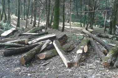 اراضی مستعد قابل واگذاری برای زراعت چوب شناسایی شوند