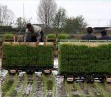 افزایش مکانیزاسیون برای تولید برنج در گیلان