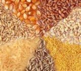 تأمین نهاده های دامی و کشاورزی برای حفظ استقلال و امنیت غذایی