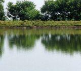 اولویت واگذاری آببندانهای گیلان به افراد بومی