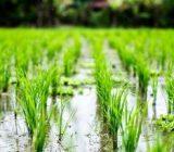 استاندار گیلان بر ضرورت مدیریت مطلوب آب زراعی تاکید کرد